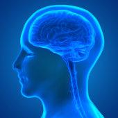 istock Human Brain Anatomy 970416578