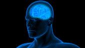 istock Human Brain Anatomy 970417408