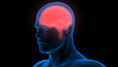 istock Human Brain Anatomy 970417464