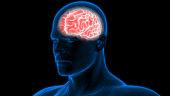 istock Human Brain Anatomy 970417496