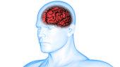 istock Human Brain Anatomy 975980766