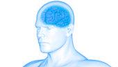 istock Human Brain Anatomy 975980858