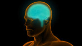 istock Human Brain Anatomy 990940192