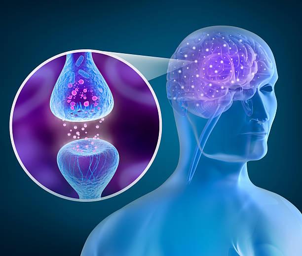 Human brain and Active receptor stock photo
