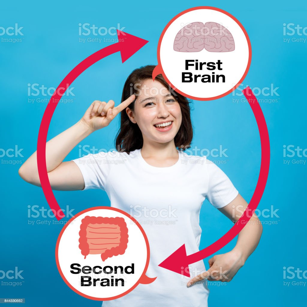 human brain and guts, second brain stock photo