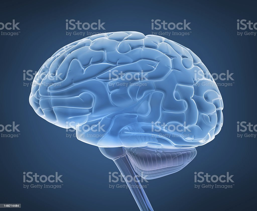 Human Brain And Spinal Cord In Xray View Stock Photo & More Pictures ...