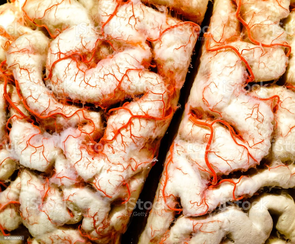 Human brain closeup stock photo