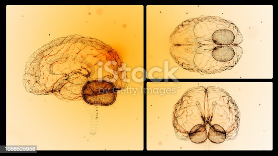 Human brain from different angles. Horizontal composition with copy space.