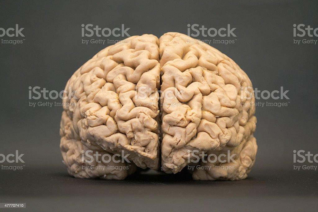 Menschliche Gehirnansichthdauflösung Stock-Fotografie und mehr ...