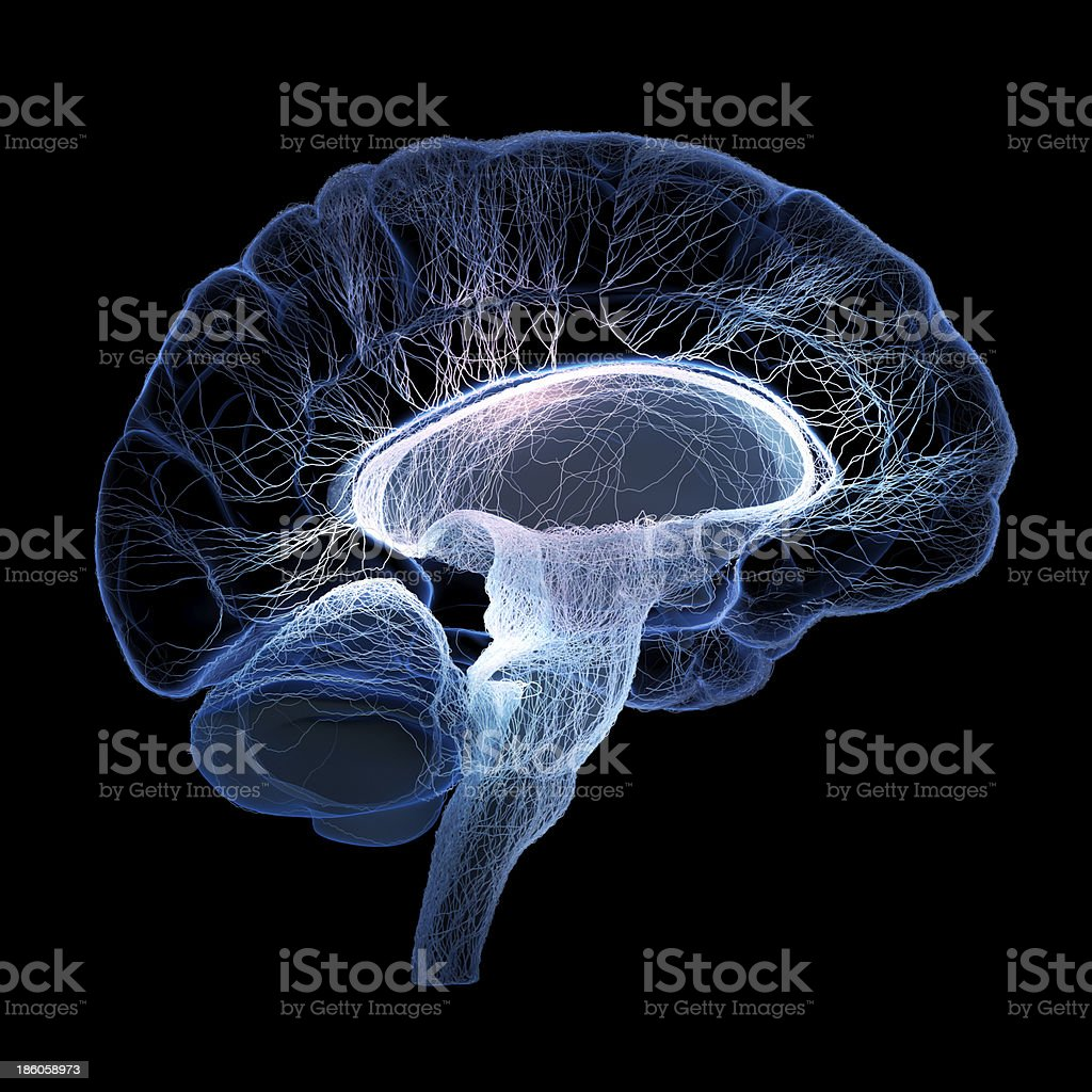Human brain illustrated with interconnected small nerves stock photo