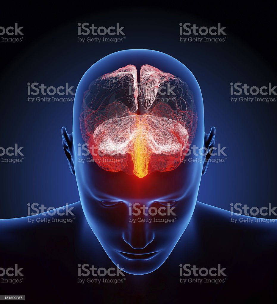 Human brain illustrated with millions of small nerves stock photo