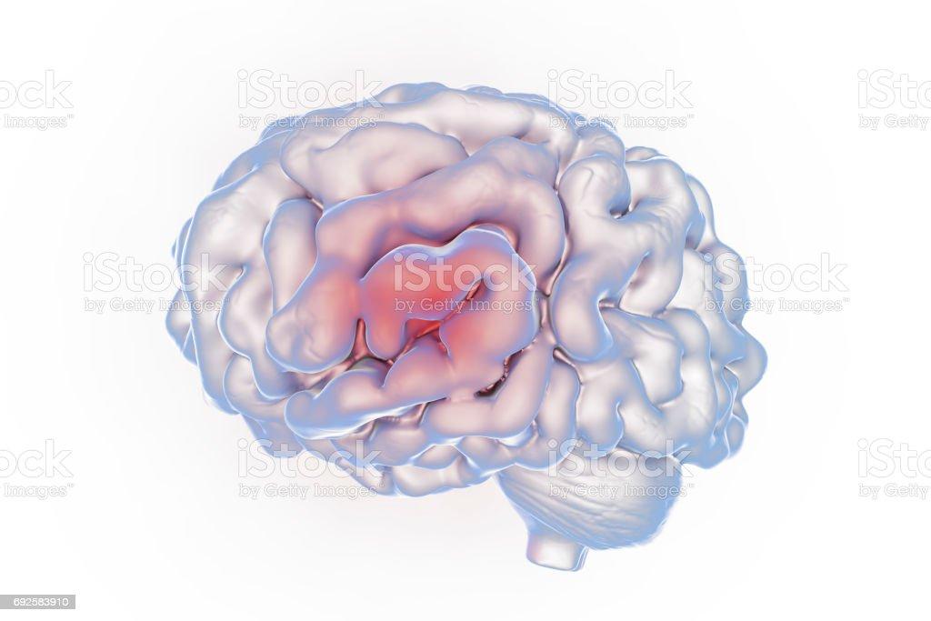 Human brain, illustration stock photo