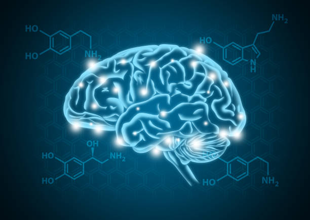 Human brain illustration with hormone biochemical concept background Human brain illustration with hormone biochemical (serotonin, dopamine, and norepinephrine) concept background neurotransmitter stock pictures, royalty-free photos & images