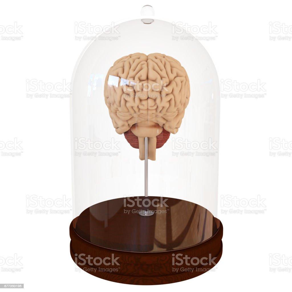 Menschliche Gehirn In Einem Glas 3d Render Stock-Fotografie und mehr ...