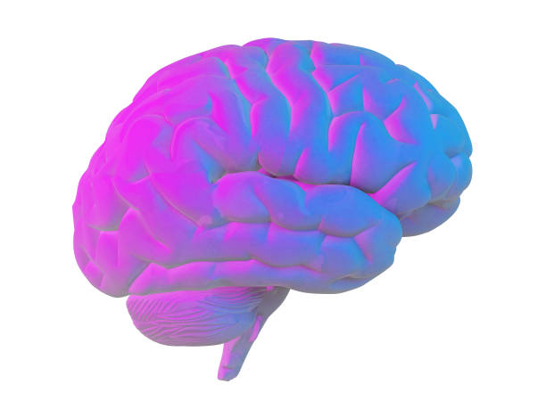 human brain in blue pink tones isolated on white stock photo
