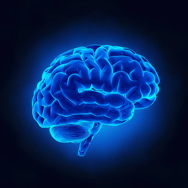 Human brain in blue x-ray view stock photo