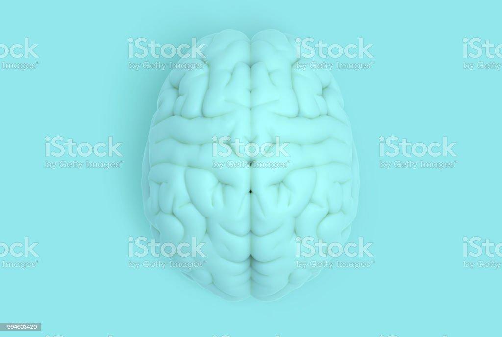 Cerveau humain en vue de dessus isolé sur bleu pastel BG photo libre de droits