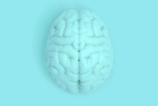 Human brain in top view isolated on blue pastel BG - foto stock