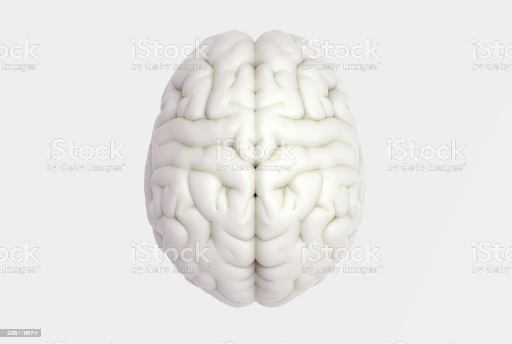 Human brain in top view isolated on white BG royalty-free stock photo