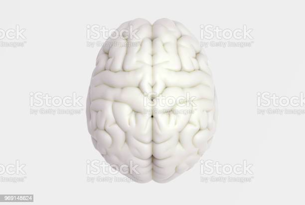 Human brain in top view isolated on white bg picture id969148624?b=1&k=6&m=969148624&s=612x612&h=gqnzblis7jg78k5yrrcwwvyplzxva7ujabu12snfw2u=
