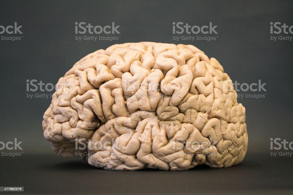 Menschliche Gehirn Seitlicher Blick Auf Der Linken Seite - Stockfoto ...