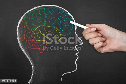 istock Human Brain Lobes on Blackboard. 517371498