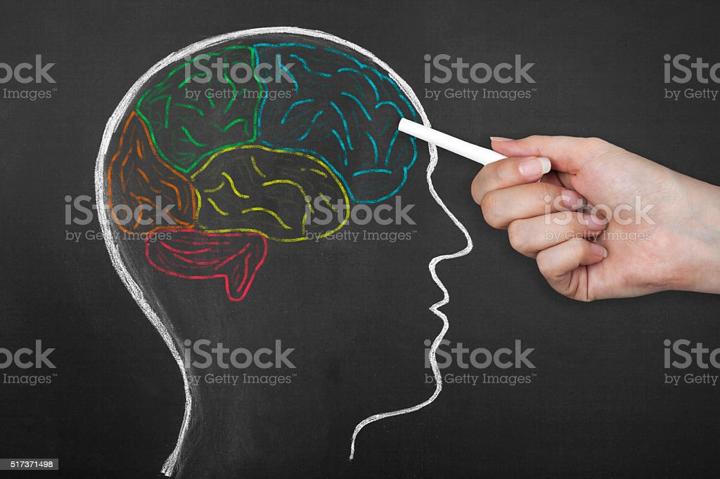 Human Brain Lobes on Blackboard. stock photo