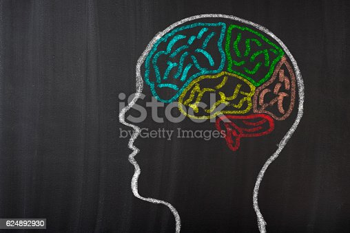istock Human Brain Lobes on Blackboard 624892930