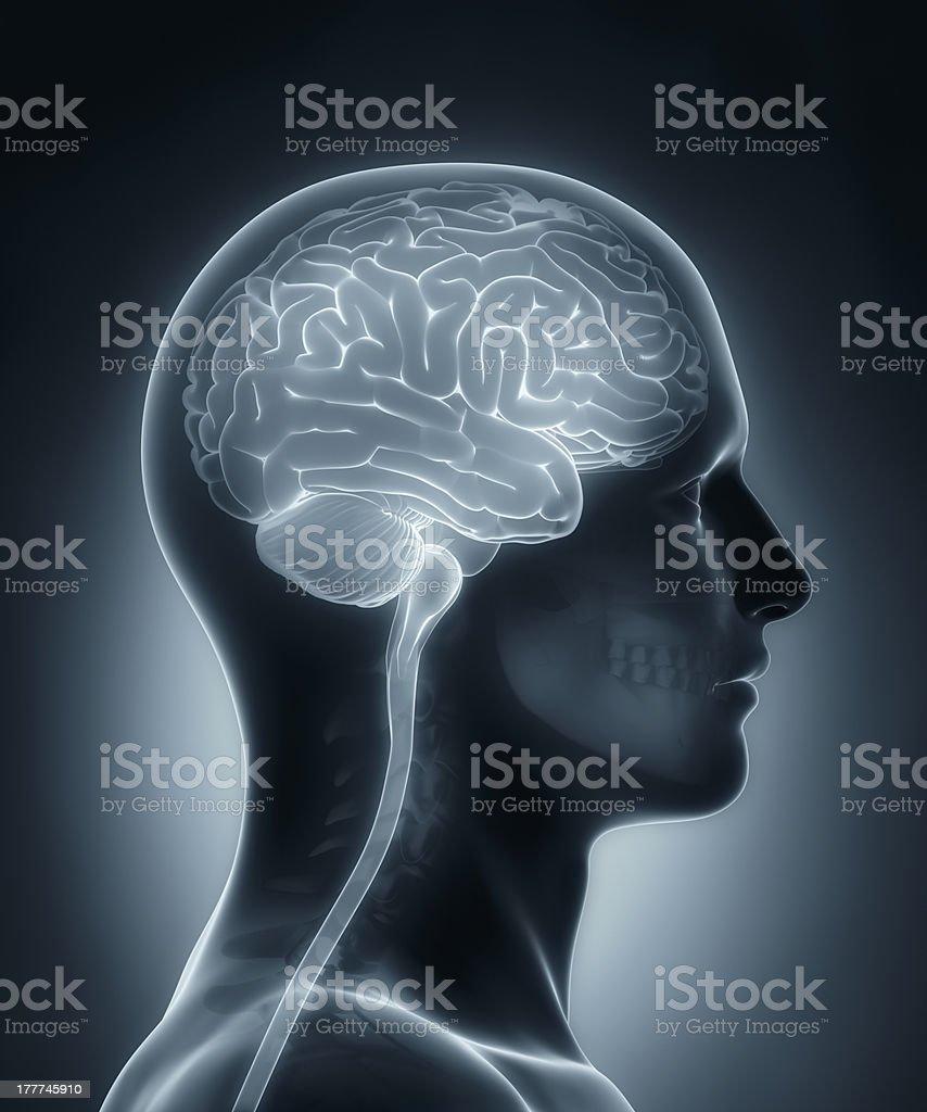 Fotografía de Cerebro Humano Médica Examen De Rayos X y más banco de ...
