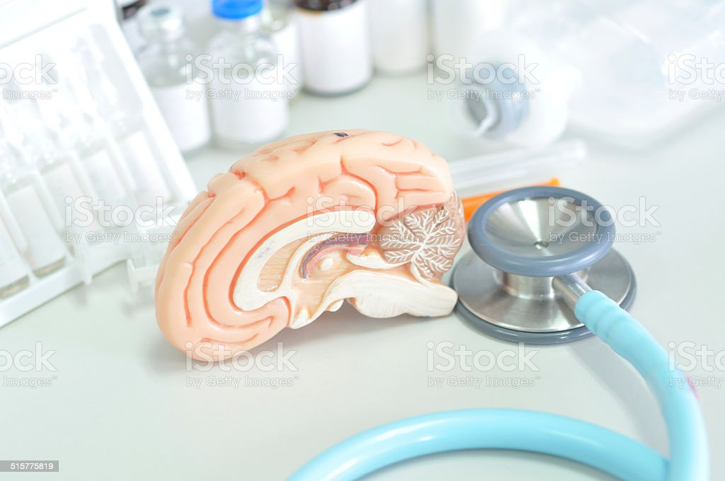 human brain model and medical laboratory stock photo