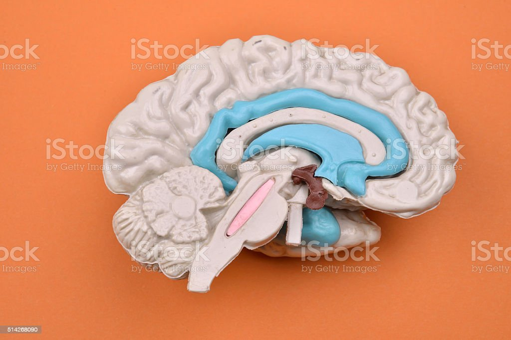 3D human brain model from external on orange background stock photo