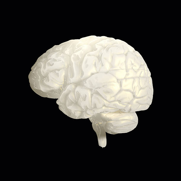 "Human brain on dark background ""Full CG images made by my self, showing a human brain on dark background."" auditory cortex stock pictures, royalty-free photos & images"