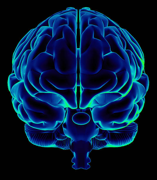 Human brain on front view Human brain on front view and isolated on black background, great to be used in medicine works and health. temporal lobe stock pictures, royalty-free photos & images