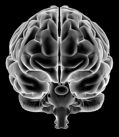 Human Brain On Front View Stock Photo - Download Image Now ...