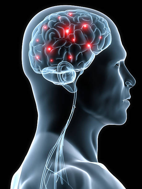 human brain active brain or headache illustration temporal lobe stock pictures, royalty-free photos & images