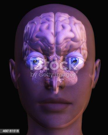 istock Human Brain 466181518