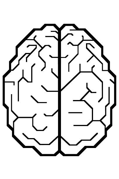 人の脳 ストックフォト