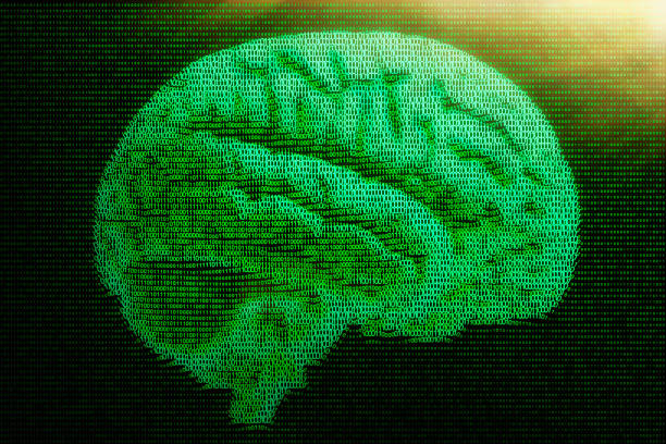 human brain rendered in digital binary 1s and 0s - bit binary stock pictures, royalty-free photos & images