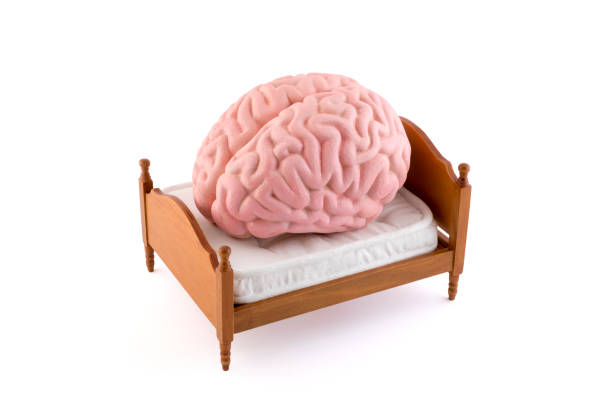 Human brain resting on the bed isolated on white background stock photo