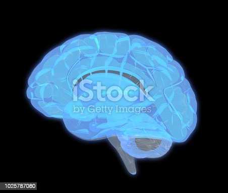 667379952istockphoto 3D human brain scan in side view isolated on black BG 1025787080
