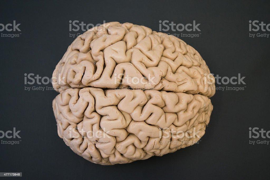 Menschliche Gehirn Superior Viewhdauflösung - Stockfoto | iStock