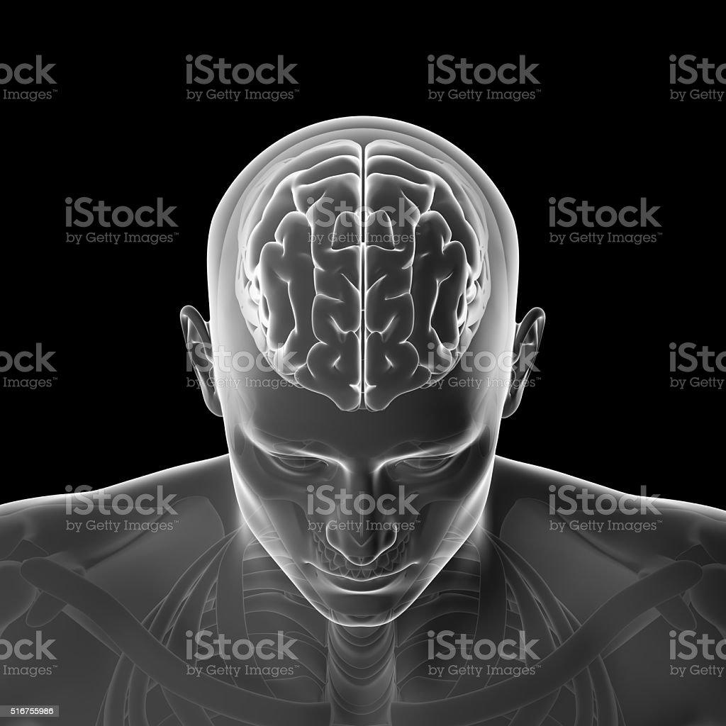 Human Brain, Thinking Head royalty-free stock photo
