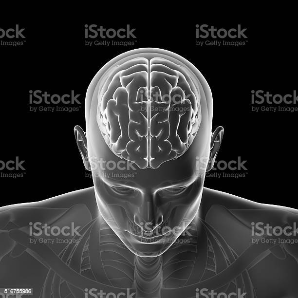 Human Brain Thinking Head Stock Photo - Download Image Now