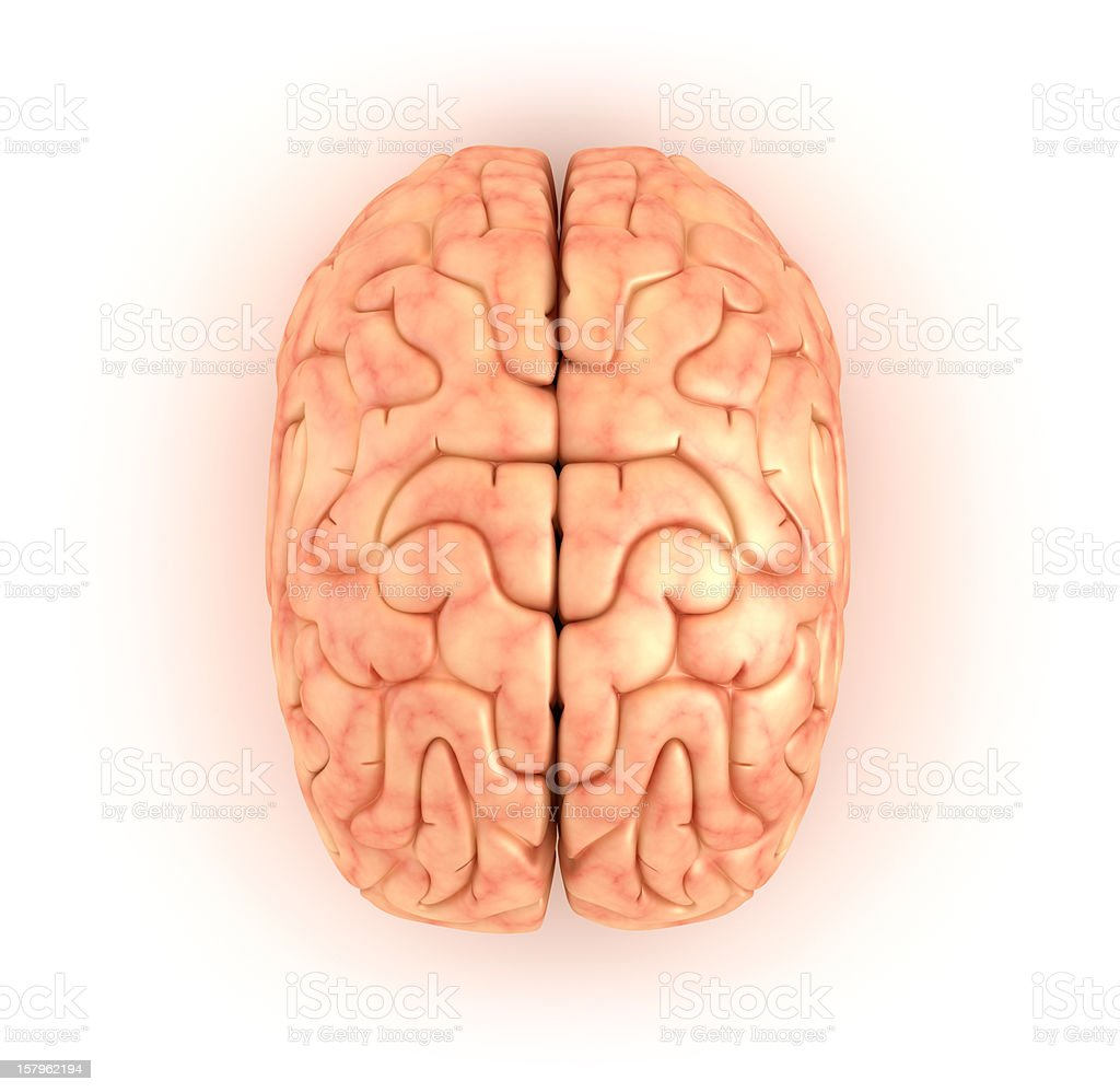 Human brain, top view stock photo