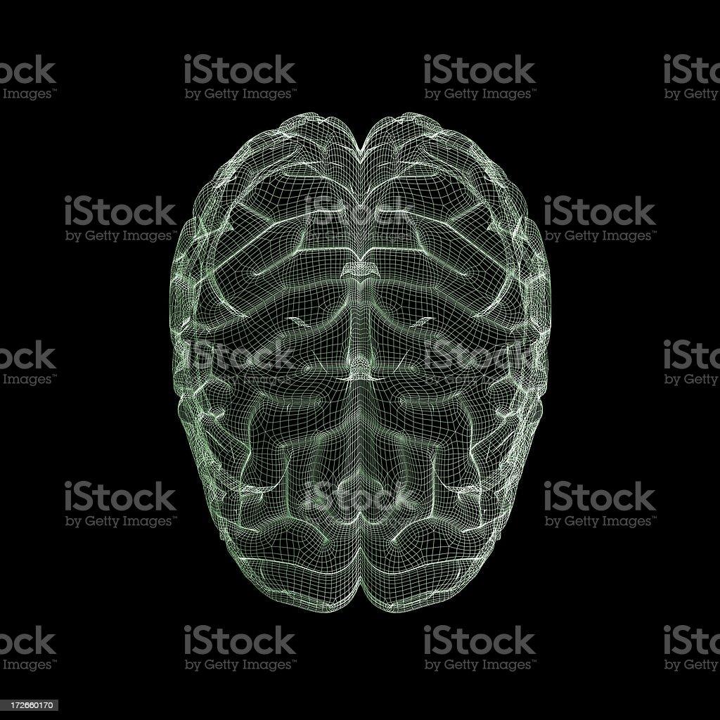 Human brain wireframe stock photo