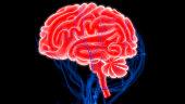 istock Human Brain with Circulatory System Anatomy 990940076