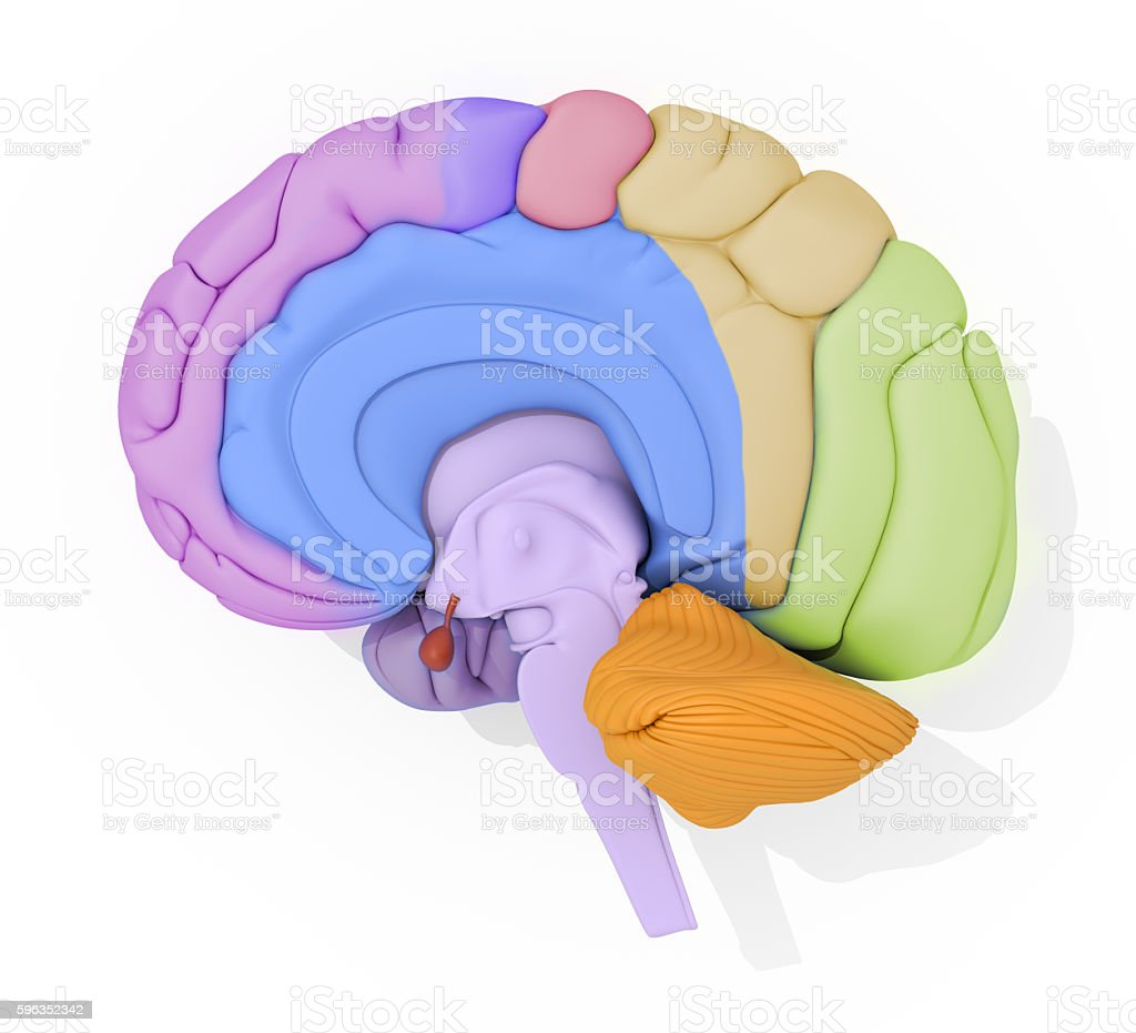 Human brain with color coded areas. 3d illustration Lizenzfreies stock-foto