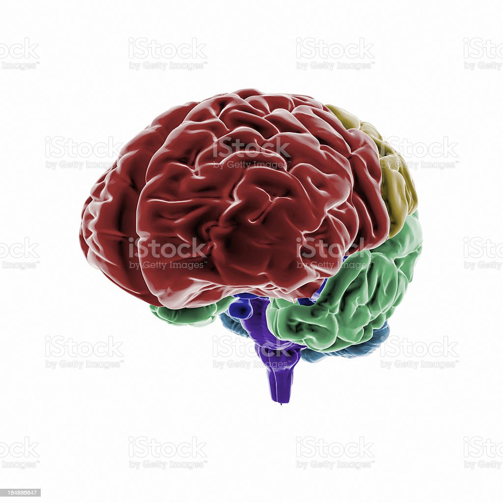 Human Brain with colored regions stock photo