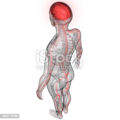 istock Human Brain with Nervous system Anatomy 896218380