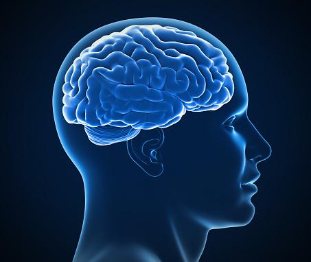 istock human brain x-ray 3d illustration 888957362
